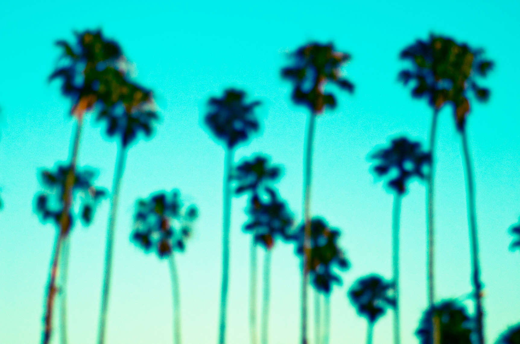 blurpalms